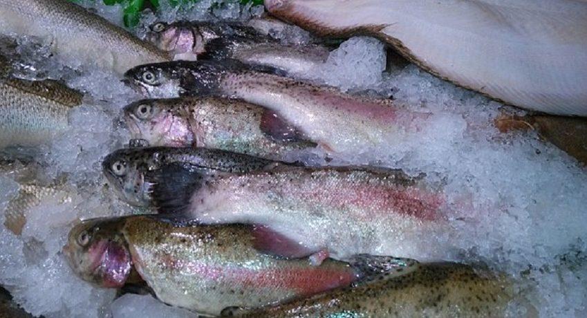 Wir suchen einen Berufskraftfahrer (w/m/d) in Hamburg für die Auslieferung von Fisch und Meeresfrüchten mit einem Kühlwagen (12t Fahrzeug), Arbeitsbeginn ab 6 Uhr.